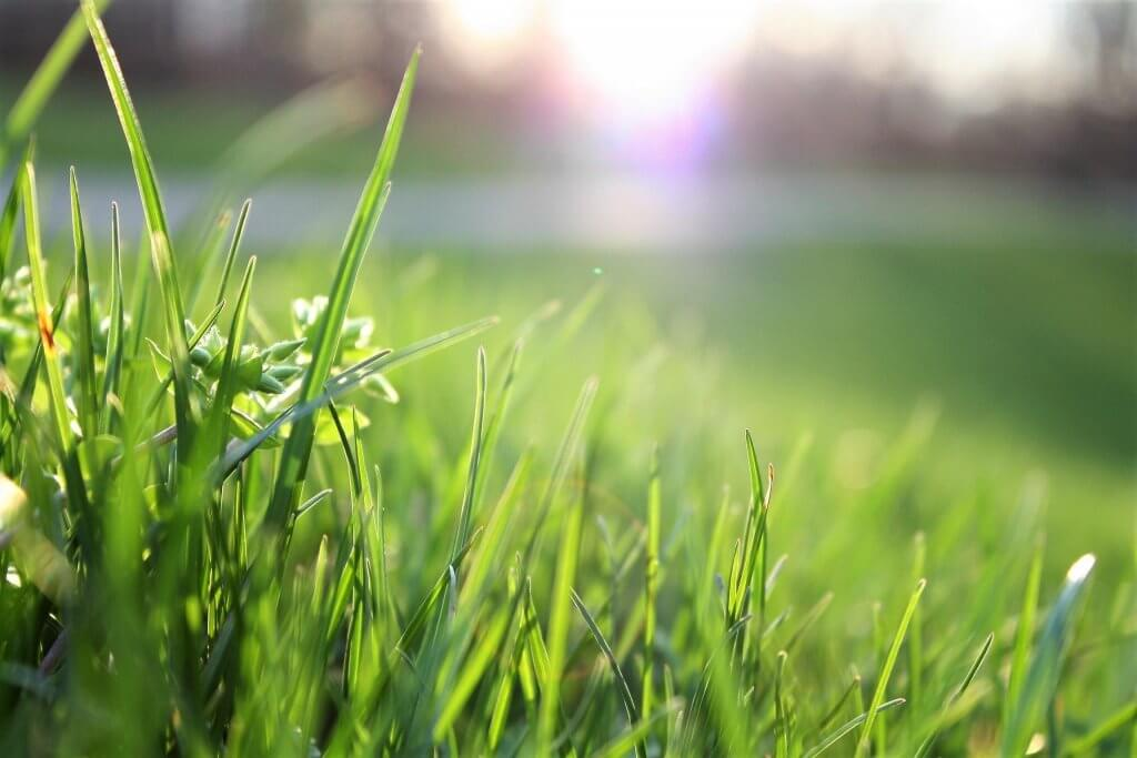 Close up of grass on a sunny day